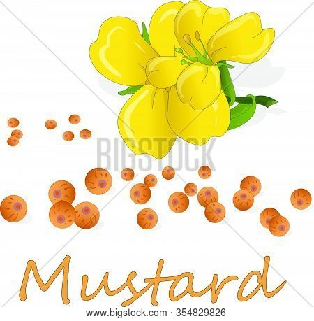 Mustard000Expanded