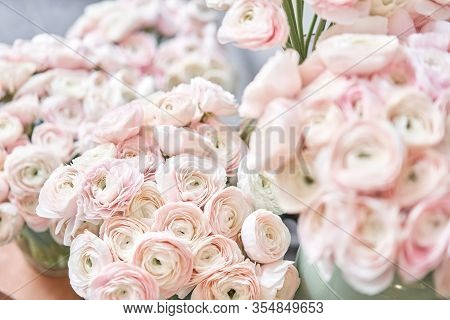 Spring Background, Flower Wallpaper. Persian Buttercup. Bunch Pale Pink Ranunculus Flowers On Light