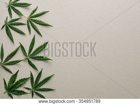 Big Fresh Green Organic Cannabis Marijuana Leaves Isolated On A Gray Grey Color Background With Copy