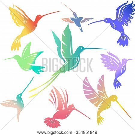 Set Of Colorful Flying Hummingbirds Isolated Colibri Symbol Vector Illustration