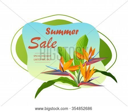 Summer Sale Banner Template. Tropical Summer Background And Summer Backdrop. Promo Badge For Seasona