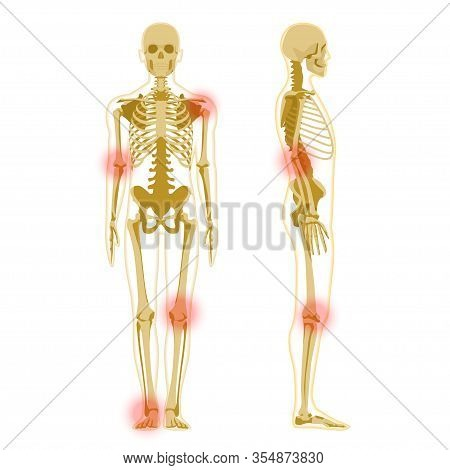 Human Skeleton In Front And Profile Isolated On White. Human Skeleton Anatomy X-ray.