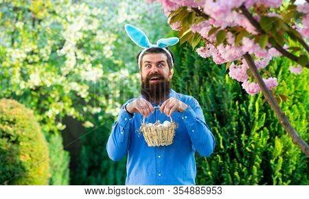 Eggs Hunt. Man In Bunny Ears Holds Easter Egg. Rabbit Man. Man With Rabbit Ears Hold Basket With Eas