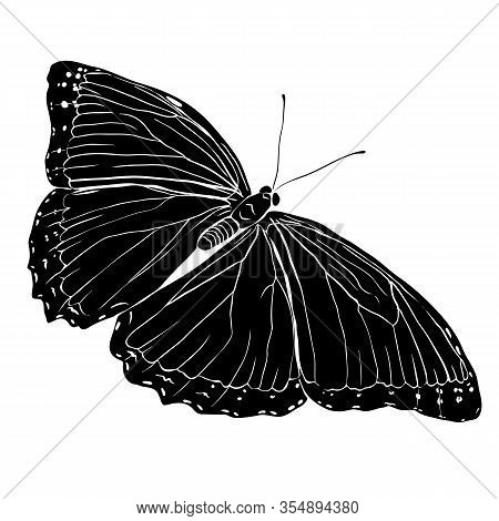 Beautiful Black Butterfly Silhouette On White Background.