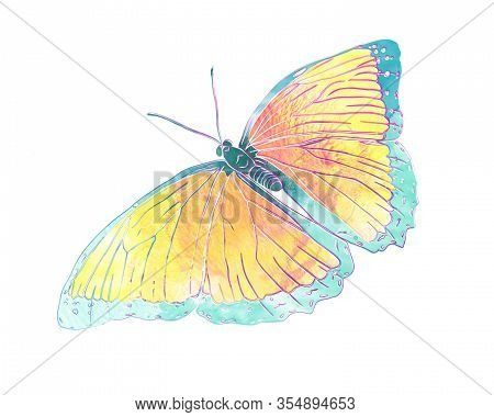 Blue Butterfly Isolated On White Background. Mix-media Illustration. Digital Painting And Watercolor