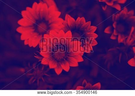 Duo Tone Gradient Flowers, Trends Style, Abstract Background For Design