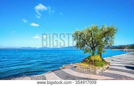 Lakefront Of Lazise And Olive Tree. Garda Lake. Veneto, Italy. Europe.