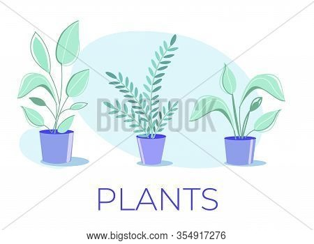Cartoon Poster With Flat Potted Houseplants Collection. Herbal Decoration Set For Home Interior, Gre