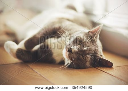A Cute, Lazy, Affectionate Cat Lies On The Wooden Floor In The Warm Sunlight And Purrs With Pleasure