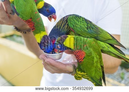 Man, Unrecognizable Person Feeds Birds With Hands. Colorful Parrots Drinking Milk From Hands In Zoo.