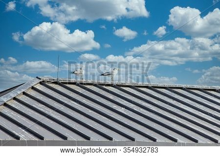 Two Seagulls Sitting On The Tin Roof Of A Pier Under Clear Blue Sky