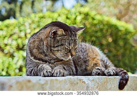 Sleeping Cute Brown Tabby Cat. Tabby Cat Lying Outdoor. Gray Street Striped Kitten Outside. Adorable