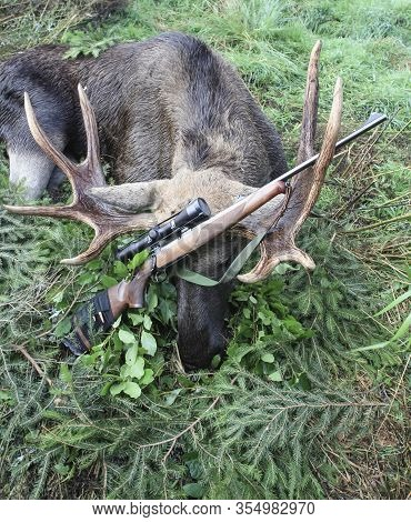 Moose Hunting Trophy And Rifle With Optics After Hunting. Elk Caught On Sport Hunting During The Rut