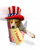 Cute Puppy that just voted wearing top hat. poster