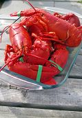 Lobster freshly cooked ready to eat on a wooden table poster