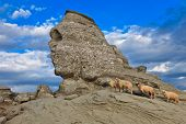 The Sphinx natural rock formation in Bucegi Mountains Romania poster