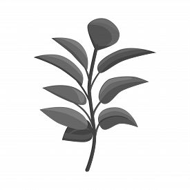 Isolated Object Of Leaf And Coffee Icon. Collection Of Leaf And Plant Stock Vector Illustration.