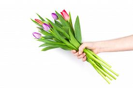 Beautiful Spring Bouquet Of Red And Purple Tulips In Female Hand Isolated On White Background With C
