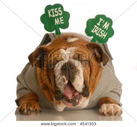 St. Patricks Day Bulldog With Funny Face