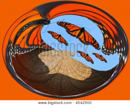 Monarch Butterfly Abstract