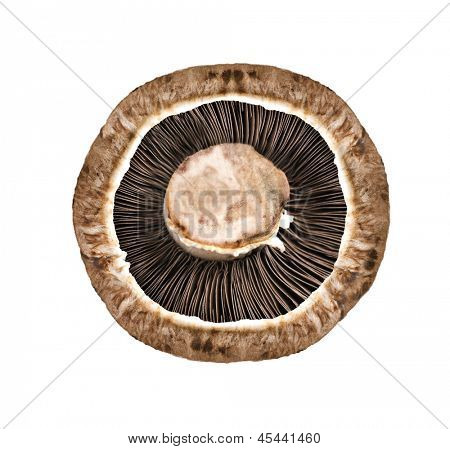 Healthy fresh mushroom with very shallow depth of field on white