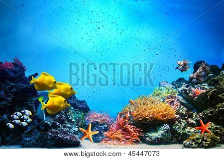 Underwater scene. Coral reef, colorful fish groups and sunny sky shining through clean ocean water. Space underwater for you to fill or just use standalone. High res poster