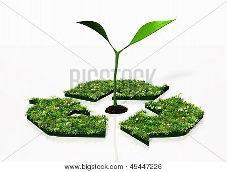Small Plant In A Recycling Symbol
