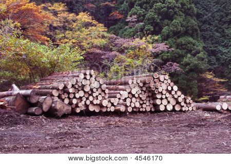 A Pile Of Logs Recently Hasvested