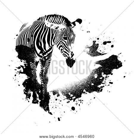 Zebra Grunge