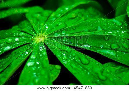 свежие зеленые листья