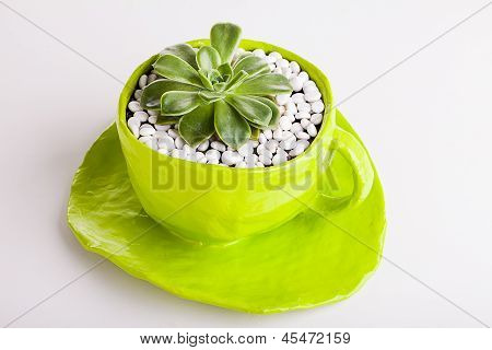 Green cup with desert rose