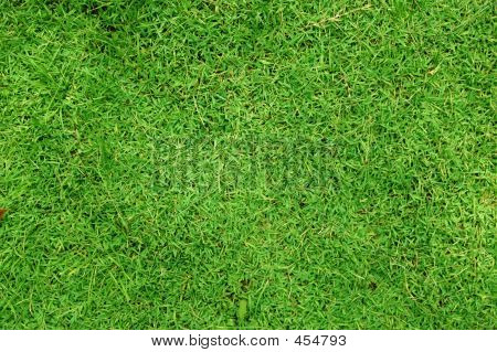 Greeny Grass