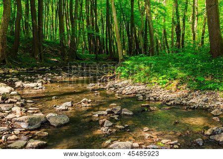 Turn Stream In Forest