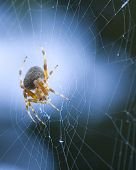 A spider constructs a web in a tree. poster