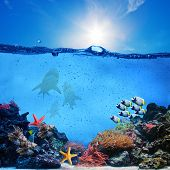 Underwater scene. Coral reef, colorful fish groups, sharks and sunny sky shining through clean ocean water. High res poster