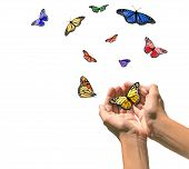 Hands Releasing Butterflies into Blank White Space. Easily Extracted. poster