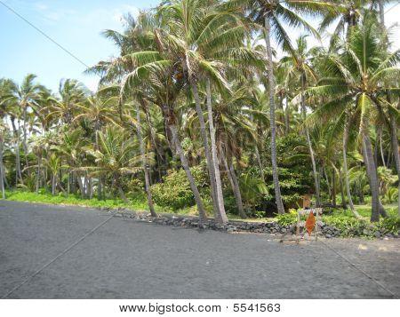 Palm Trees On Punalu`u Black Sand Beach