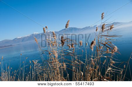 The Reed On The Frozen Lake