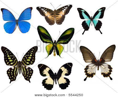 Seven Tropical Butterflies