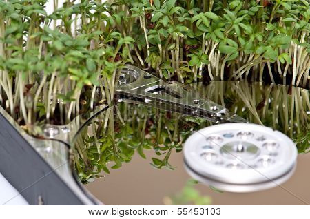 Hard disk drive with Garden Cress (Lepidium Sativum) poster