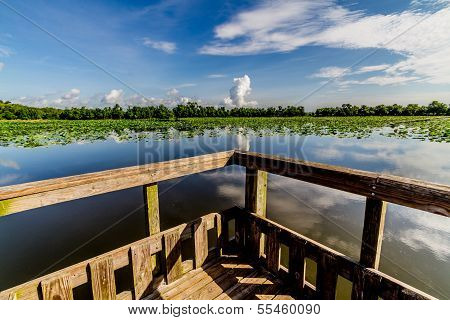 Interesting View of Lake from Fishing Dock in the Summer