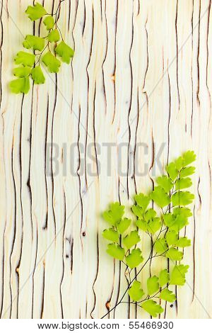 The Branches Of A Fern Lies On A Wooden Background