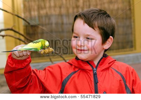 Happy boy holding and feeding parakeet