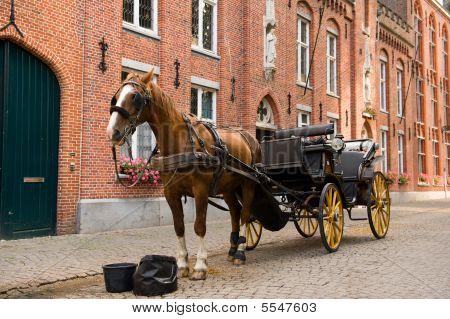 Horse On Her Break