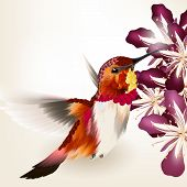 Vector illustration with realistic humming bird for design poster