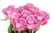beautiful bouquet of pinkroses isolated on white background poster