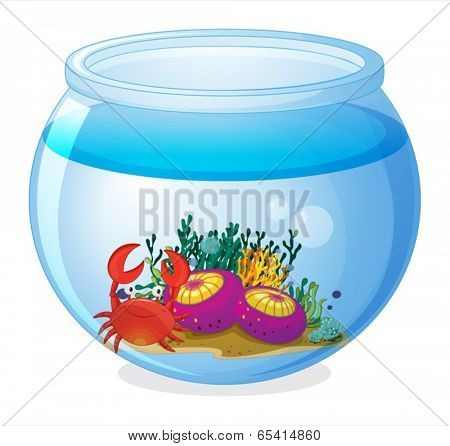 Illustration of an aquarium with sea creatures on a white background