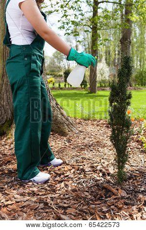 Woman Spaying Plants