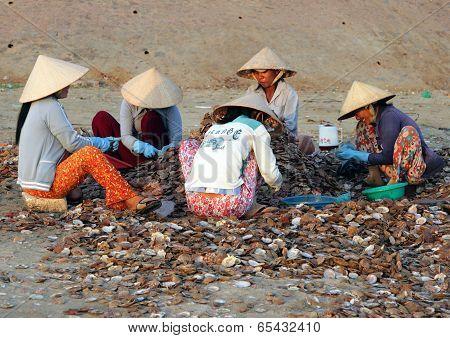 Muine, Vietnam - Feb 13, 2009: Vietnamese Women Sort Seashells On The Shore. Extraction Of Seafood I