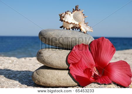 Seashell And Hibiskus